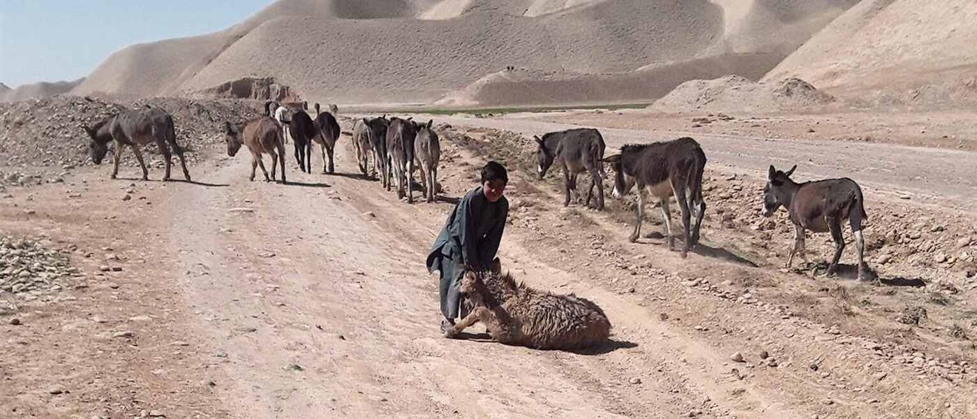 OCHA's pooled funds support aid for people affected by drought in Afghanistan
